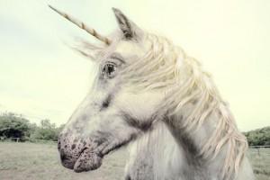 unicorn-620x414