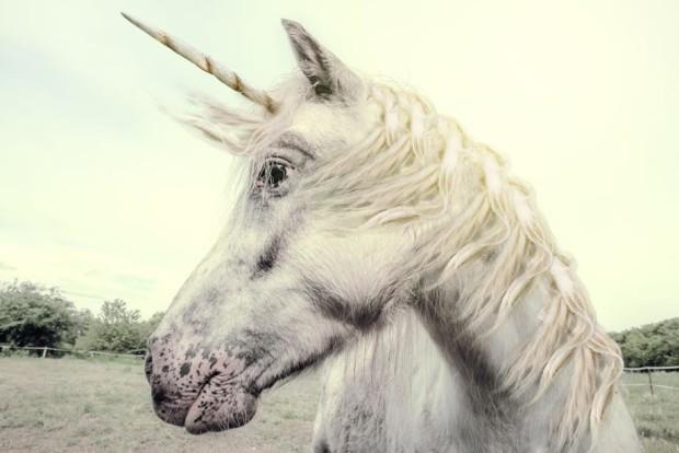 unicorn-620×414